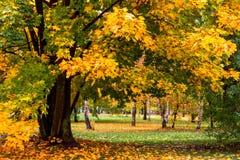 秋天公园黄色叶子 库存照片