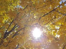 秋天公园黄色留下天空 库存照片