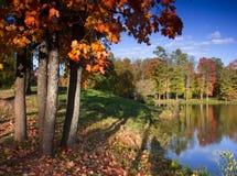 秋天公园,圣彼德堡,俄罗斯 免版税库存图片