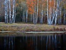 秋天公园,圣彼德堡,俄罗斯 免版税库存照片
