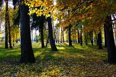 秋天公园 太阳的光芒打破秋天叶子 背景测试批次油画部分纹理那里 免版税图库摄影