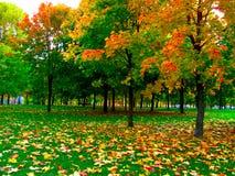 秋天公园 库存照片