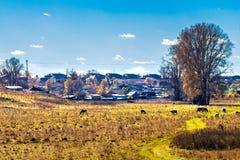 秋天农村横向 西西伯利亚,俄罗斯 免版税库存图片