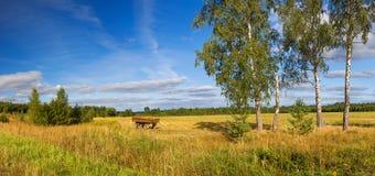 秋天农村风景全景、领域、森林、蓝天和whi 免版税库存图片