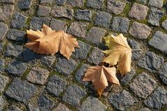 秋天冬天叶子 库存照片