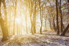 秋天冬天风景 库存照片