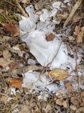 秋天冰和叶子 免版税图库摄影