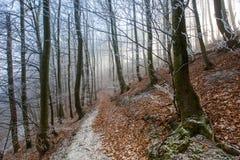 秋天冷淡的森林 免版税库存图片