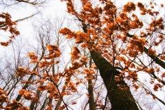 秋天冷的天,在trees_的风摇摆的叶子 免版税库存图片