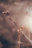 秋天分支特写镜头反对温暖的布朗背景的 库存照片