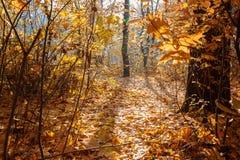 秋天分支狂放上升了与树冰 免版税库存图片
