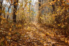 秋天分支狂放上升了与树冰 免版税库存照片