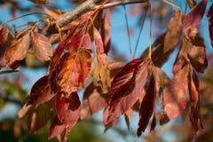 秋天分行五颜六色的叶子 库存照片