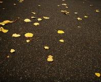秋天划分为的叶子 免版税图库摄影