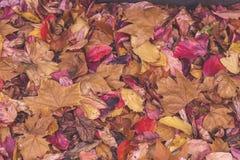 秋天划分为的叶子 图库摄影