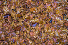 秋天划分为的叶子 免版税库存照片