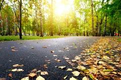 秋天划分为的横向留下公园路黄色 免版税库存图片