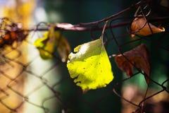 秋天划分为的范围叶子电汇 库存图片