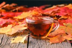 秋天创造性的艺术概念,槭树在桌离开 免版税库存照片