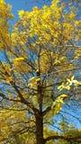 秋天到达了 库存照片