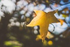 秋天前片叶子 库存照片