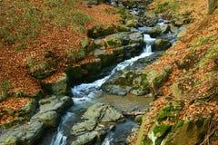 秋天剪切森林石头通过谷 免版税库存图片