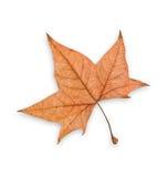秋天剪报叶子路径 免版税库存图片
