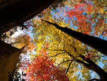 秋天加冠结构树 免版税图库摄影