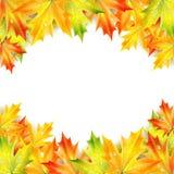 秋天加拿大秋天留下槭树 向量例证