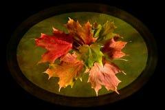 秋天加拿大秋天留下槭树 免版税图库摄影