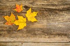 秋天加拿大秋天留下槭树 图库摄影