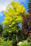 秋天加拿大颜色 免版税图库摄影