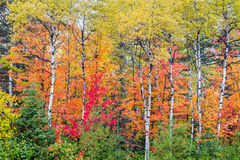 秋天北部木头 库存图片