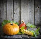 秋天南瓜和玉米 免版税图库摄影