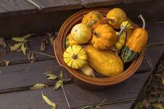秋天南瓜和金瓜 图库摄影