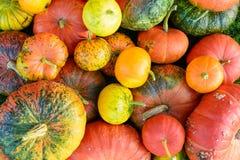 秋天南瓜的五颜六色的混合 免版税库存图片