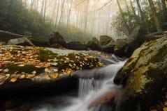 秋天卡罗来纳州有雾的北部流 库存图片