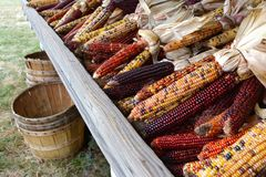 秋天印第安玉米 图库摄影