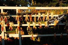 秋天印第安玉米 免版税库存照片