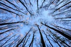 秋天反对天空的树剪影 图库摄影