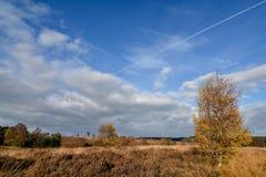 秋天反对蓝天的云彩形成在Cannock追逐 免版税库存图片