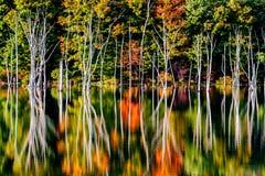 秋天反射和一个被充斥的森林Monksville水库的 库存照片