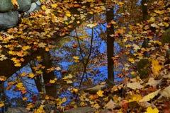 秋天反射在一个晴天 库存图片