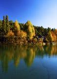秋天反映结构树水 免版税库存照片