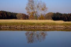 秋天反映结构树水 免版税库存图片