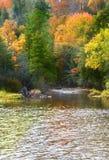 秋天反映结构树 库存照片