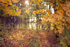 秋天发光 库存图片