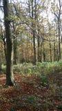 秋天变动 库存照片