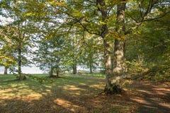 秋天可用的例证结构树向量 秋天五颜六色的叶子 在地面的叶子 秋天tr 免版税库存照片