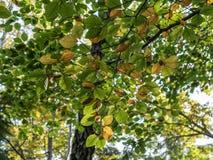 秋天可用的例证结构树向量 秋天五颜六色的叶子 在地面的叶子 秋天tr 免版税库存图片